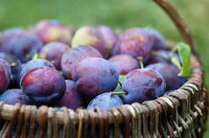 plums in the basket
